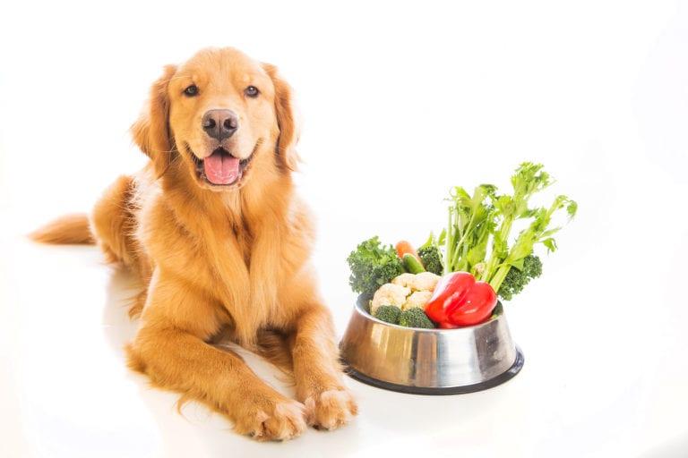 comida mascotas